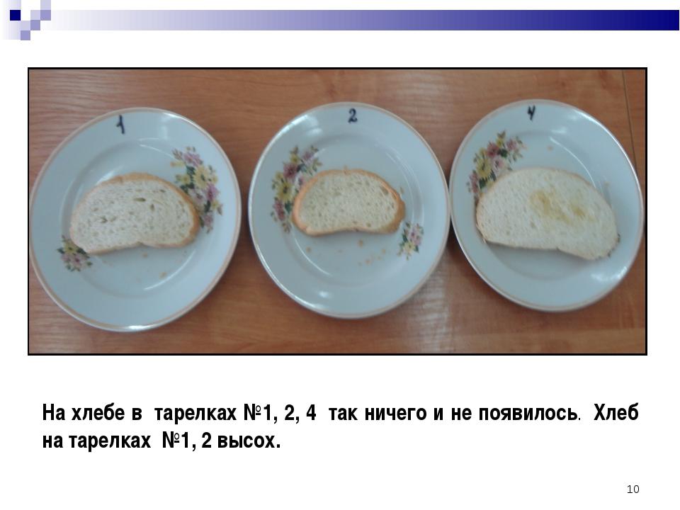 * На хлебе в тарелках №1, 2, 4 так ничего и не появилось. Хлеб на тарелках №1...