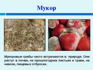 Мукор Мукоровые грибы часто встречаются в природе. Они растут в почве, на пр