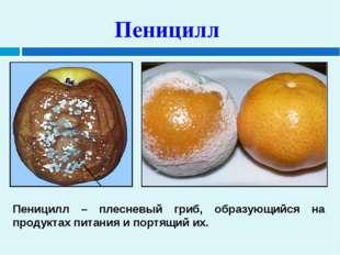 Пеницилл Пеницилл – плесневый гриб, образующийся на продуктах питания и портя