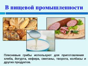 В пищевой промышленности Плесневые грибы используют для приготовления хлеба,