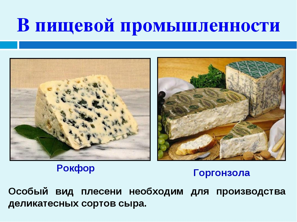 В пищевой промышленности Особый вид плесени необходим для производства делика...