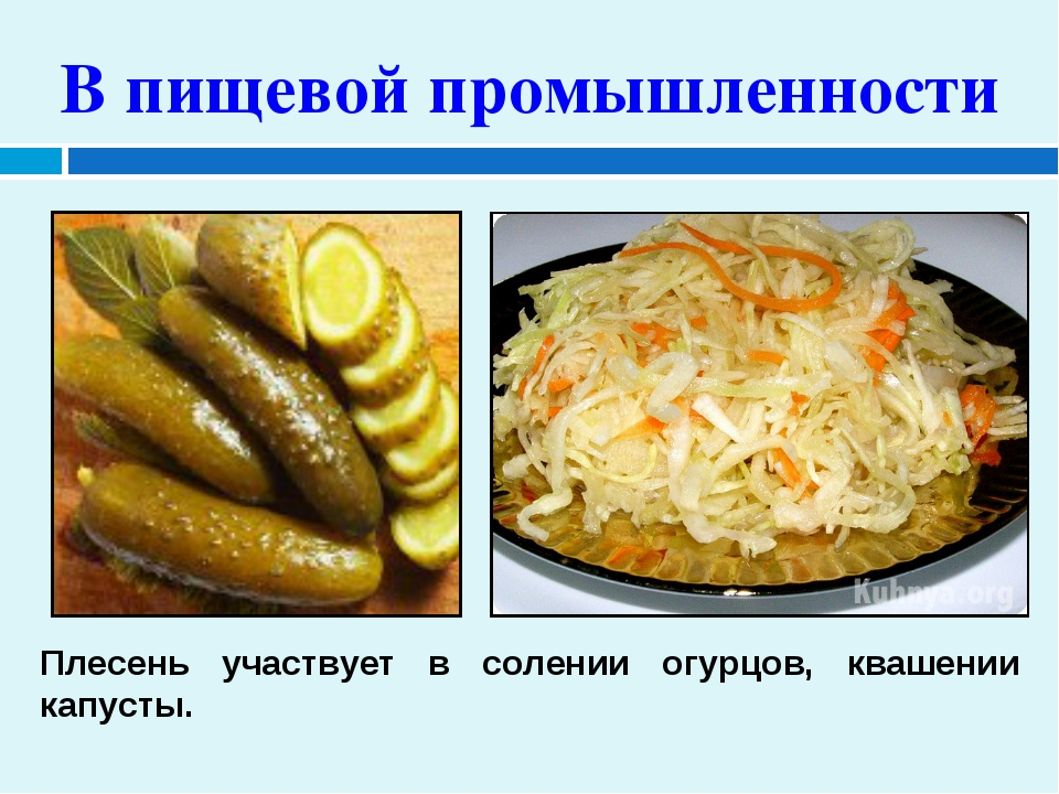В пищевой промышленности Плесень участвует в солении огурцов, квашении капусты.