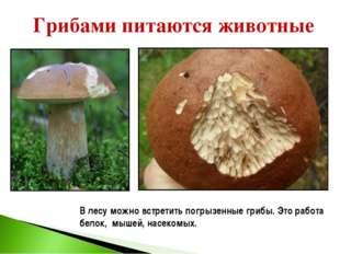 Грибами питаются животные В лесу можно встретить погрызенные грибы. Это работ