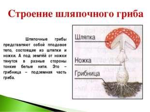 Строение шляпочного гриба Шляпочные грибы представляют собой плодовое тело, с