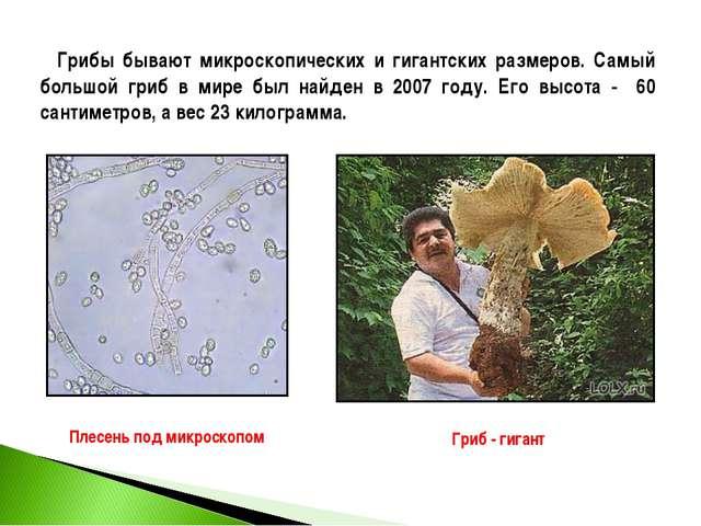 Грибы бывают микроскопических и гигантских размеров. Самый большой гриб в ми...