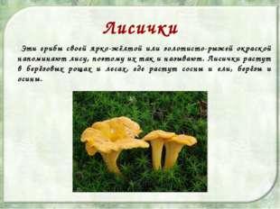 Лисички Эти грибы своей ярко-жёлтой или золотисто-рыжей окраской напоминают л