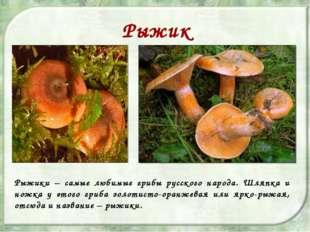 Рыжик Рыжики – самые любимые грибы русского народа. Шляпка и ножка у этого гр