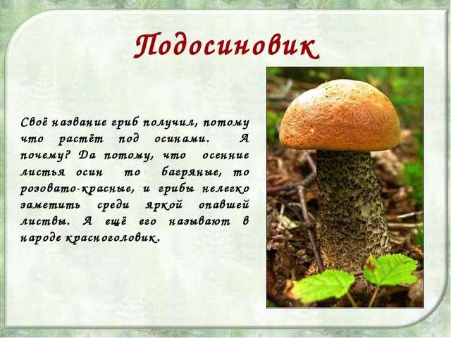 Подосиновик Своё название гриб получил, потому что растёт под осинами. А поче...