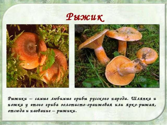 Рыжик Рыжики – самые любимые грибы русского народа. Шляпка и ножка у этого гр...