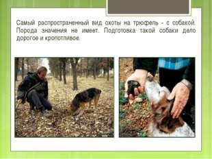Самый распространенный вид охоты на трюфель - с собакой. Порода значения не и