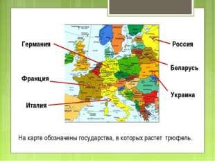 На карте обозначены государства, в которых растет трюфель. Россия Беларусь Ук