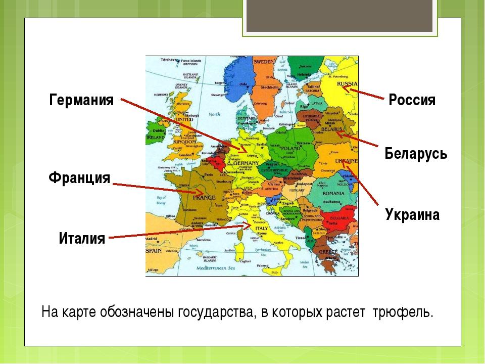 На карте обозначены государства, в которых растет трюфель. Россия Беларусь Ук...
