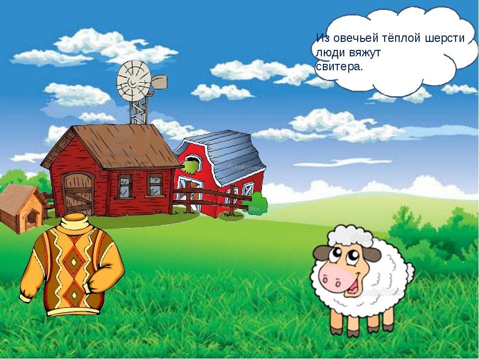 Из овечьей тёплой шерсти люди вяжут свитера.