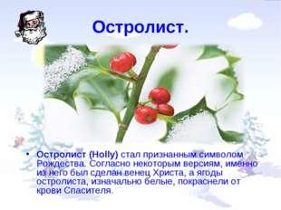 Остролист. Остролист (Holly) стал признанным символом Рождества. Согласно нек