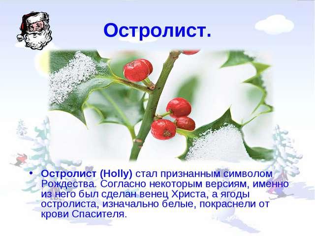 Остролист. Остролист (Holly) стал признанным символом Рождества. Согласно нек...