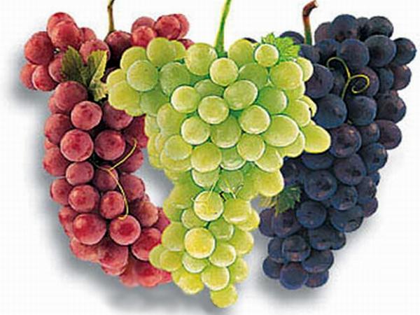 Виноград плоды фото