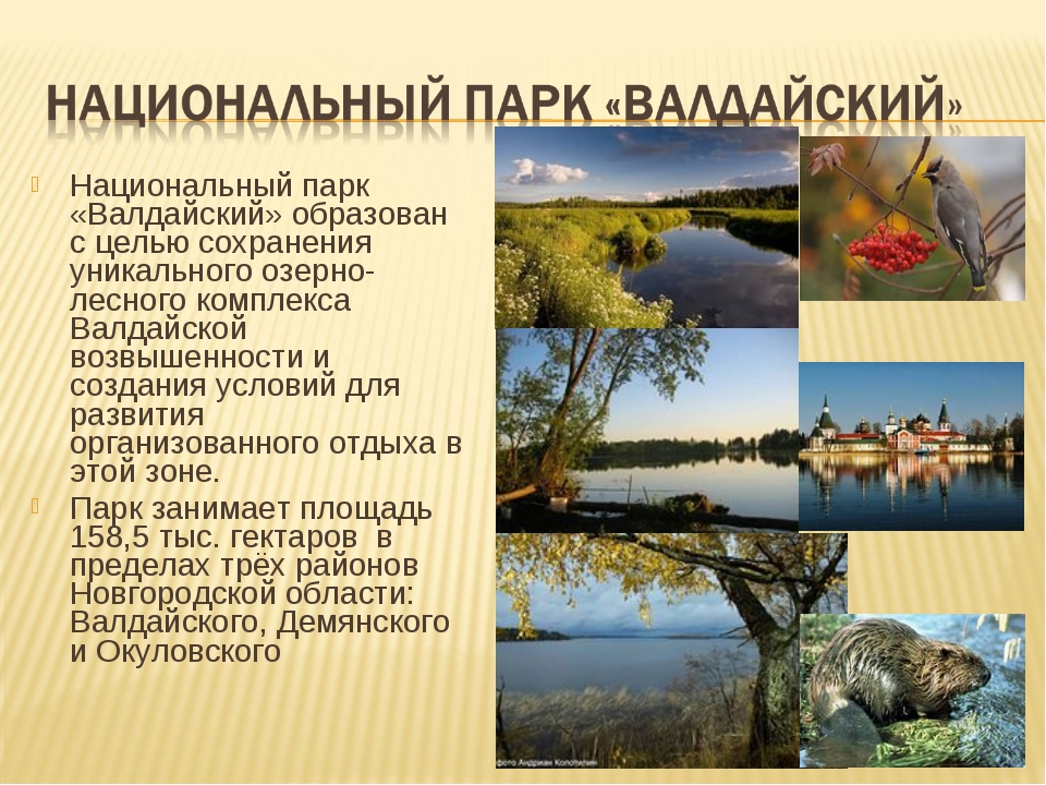 Национальный парк «Валдайский» образован с целью сохранения уникального озерн...