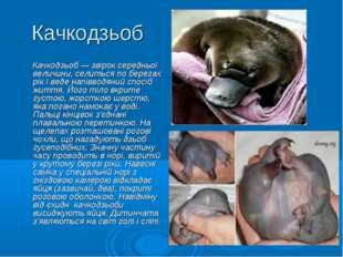 Качкодзьоб Качкодзьоб — звірок середньої величини, селиться по берегах рік і