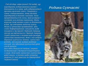 Родина Сумчасті Ряд об'єднує звірів (понад 250 видів), що народжують недорозв