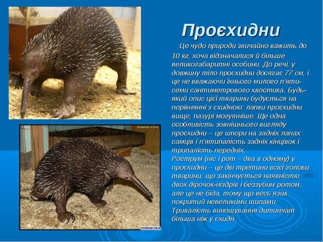 Проєхидни Це чудо природи звичайно важить до 10 кг, хоча відзначалися й біль...