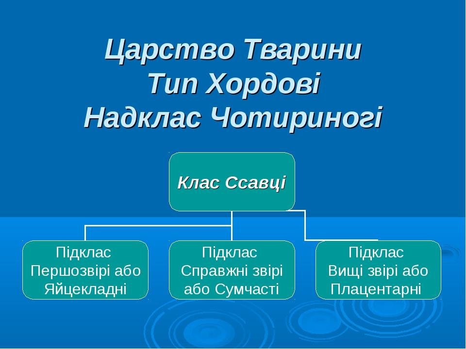 Царство Тварини Тип Хордові Надклас Чотириногі