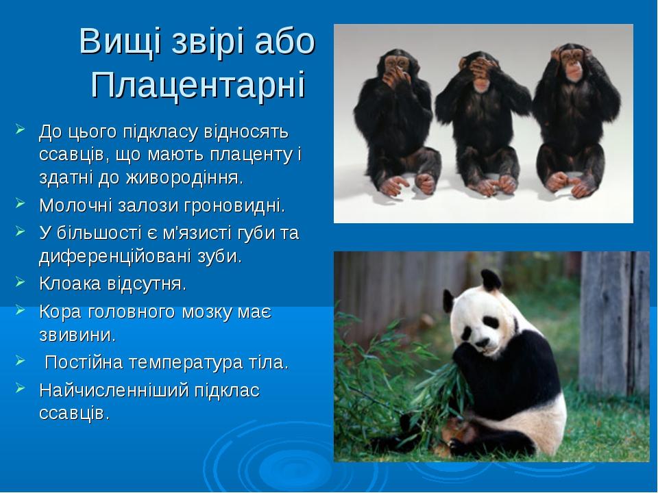 Вищі звірі або Плацентарні До цього підкласу відносять ссавців, що мають плац...