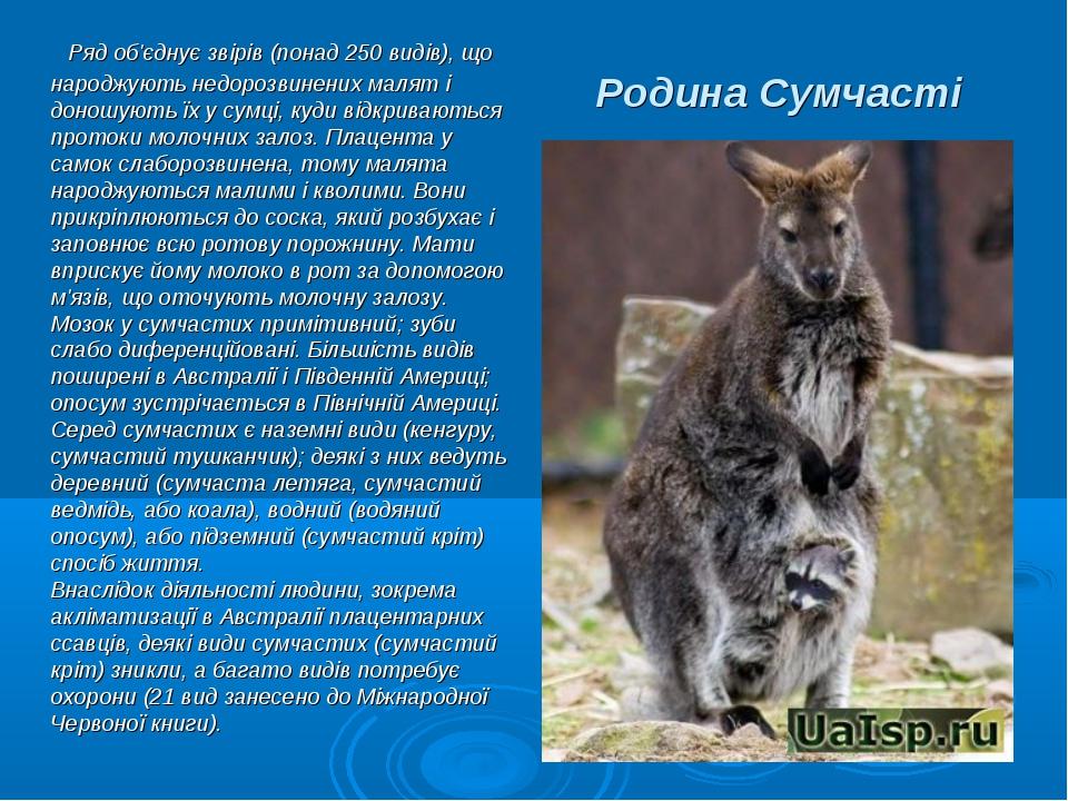 Родина Сумчасті Ряд об'єднує звірів (понад 250 видів), що народжують недорозв...