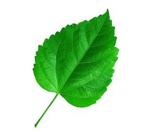http://www.photoshop-info.ru/uroki/flora/11.jpg