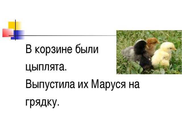 В корзине были цыплята. Выпустила их Маруся на грядку.