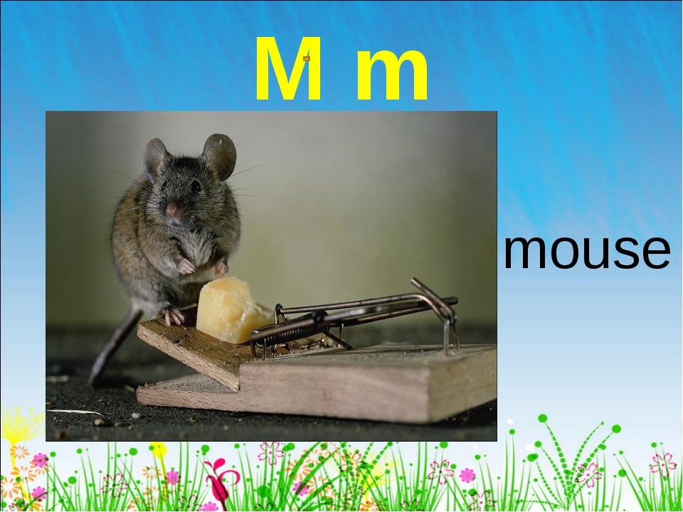 M m mouse