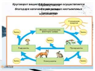 Круговорот веществ в биогеоценозе осуществляется благодаря наличию в нем чет