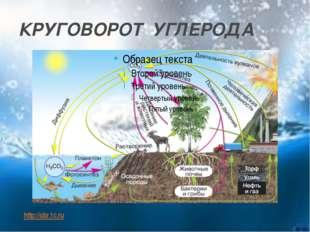 КРУГОВОРОТ УГЛЕРОДА http://obr.1c.ru