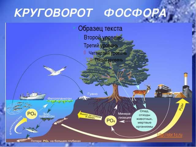 КРУГОВОРОТ ФОСФОРА http://obr.1c.ru