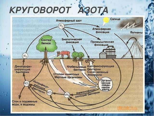КРУГОВОРОТ АЗОТА http://obr.1c.ru