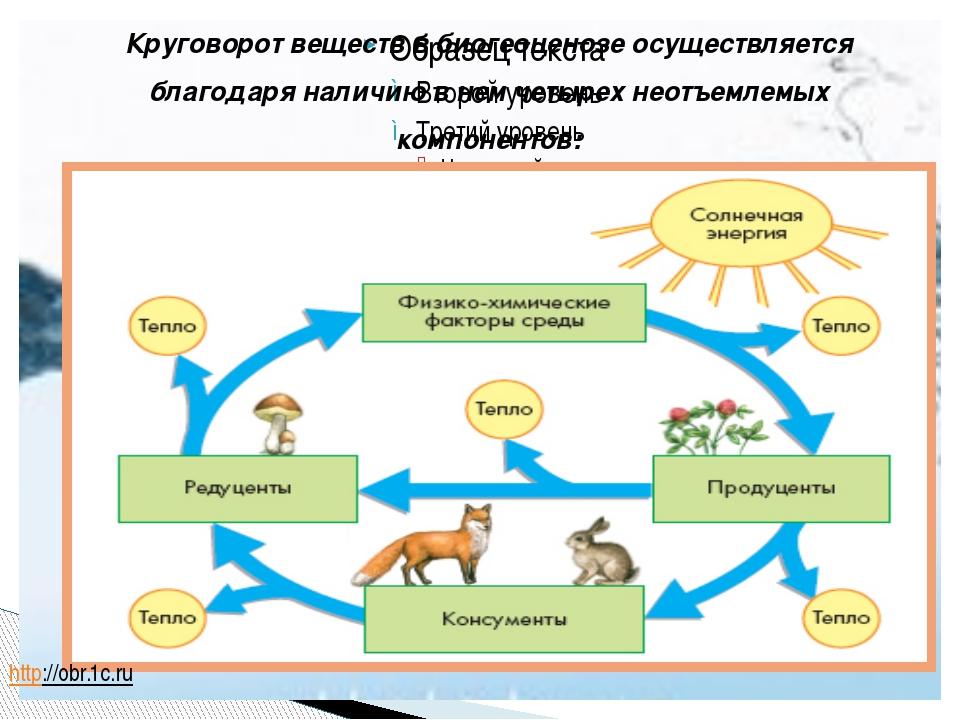 Круговорот веществ в биогеоценозе осуществляется благодаря наличию в нем чет...