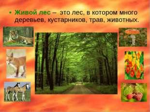 Живой лес – это лес, в котором много деревьев, кустарников, трав, животных.