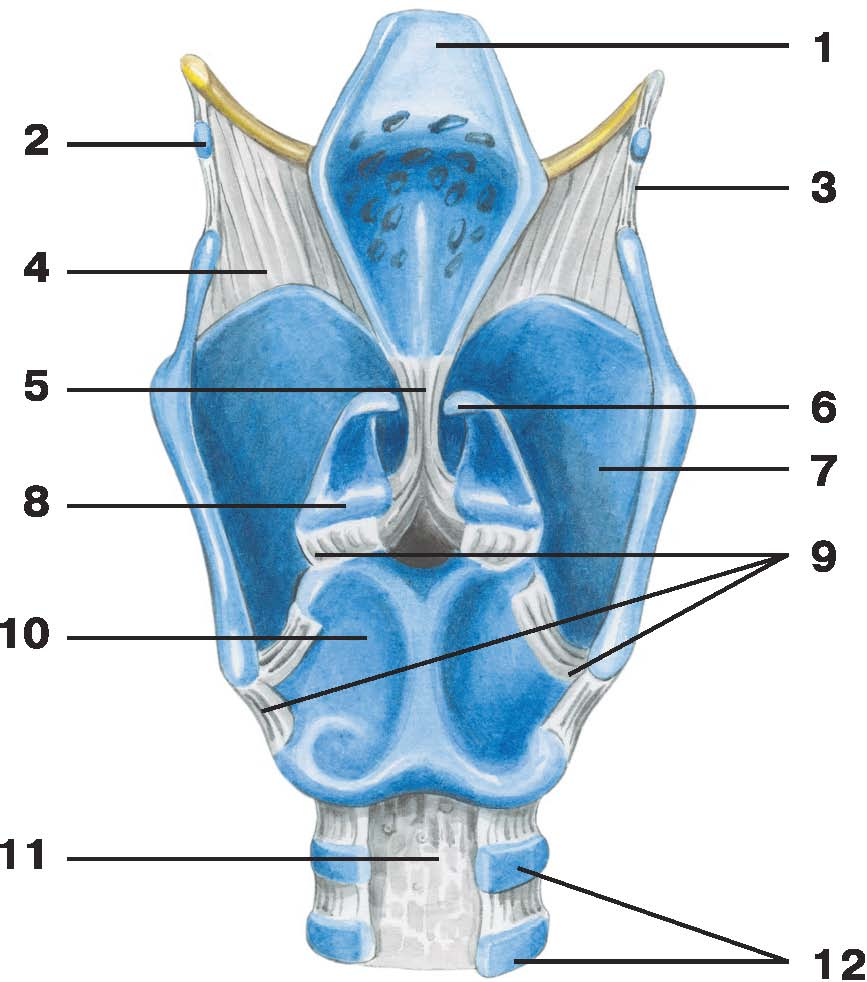 C:\Documents and Settings\Любовь\Мои документы\всё об анатомии\атласы\Атлас анатомии\image429.jpg