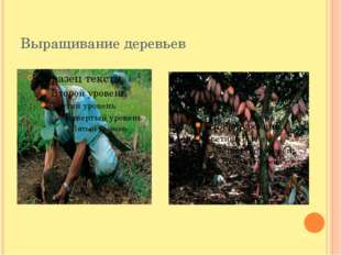 Выращивание деревьев