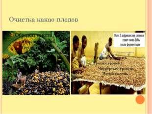 Очистка какао плодов