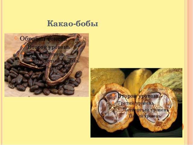 Какао-бобы Какао-бобы свежесобранных плодов не обладают вкусовыми и ароматиче...