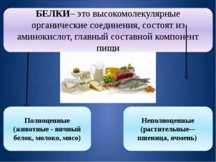БЕЛКИ– это высокомолекулярные органические соединения, состоят из аминокислот