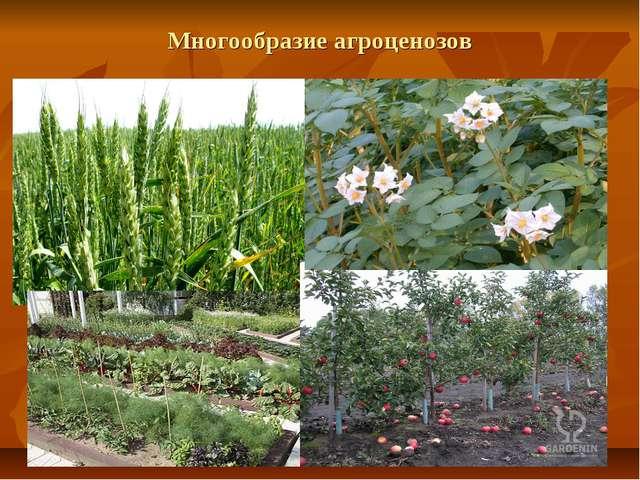 Многообразие агроценозов