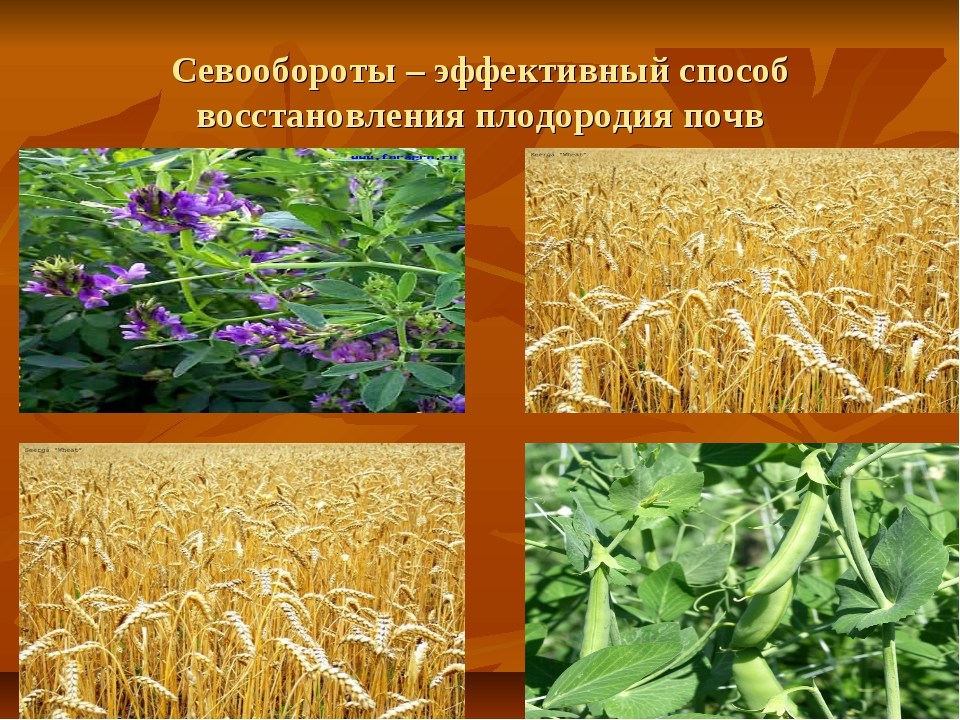 Севообороты – эффективный способ восстановления плодородия почв