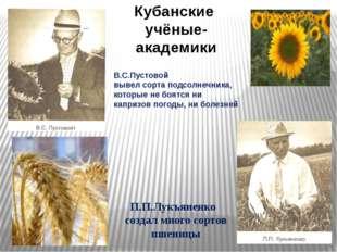 В.С.Пустовой вывел сорта подсолнечника, которые не боятся ни капризов погоды,