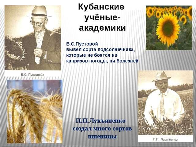 В.С.Пустовой вывел сорта подсолнечника, которые не боятся ни капризов погоды,...
