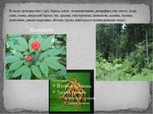 В лесах произрастают :дуб, береза, ильм , можжевельник ,демарфант, ель, пихта