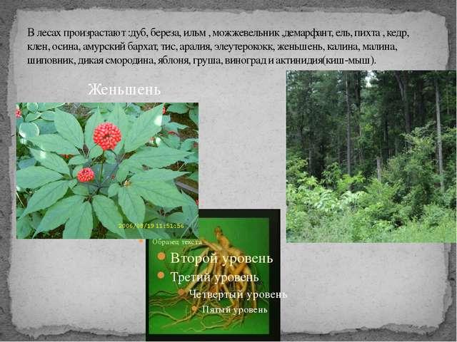 В лесах произрастают :дуб, береза, ильм , можжевельник ,демарфант, ель, пихта...