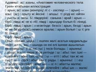 Адамның асқазаны, «Анатомия человеческого тела Грея» кітабынан иллюстрация Қа
