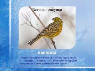 свиристель Красивая певчая птица, размером меньше скворца. Оперение густоеи