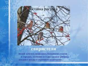 снегирь Снегирь охотно поедает семена репейника, конского щавеля, конопли, ле